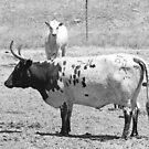 Ain't No Bull by Chet  King