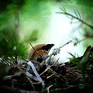 A nest by lumiwa