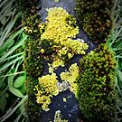 moss I by NafetsNuarb