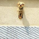 How much is that doggy in the window? by Michelle Neeling