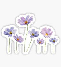 Pegatina acuarela cosmos flores púrpura