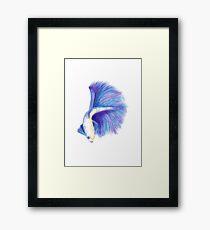 Watercolour Betafish Framed Print