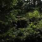 Forest  by verivela