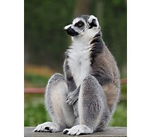 3523047fc852 Ring Tailed Lemur