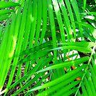 Palm Green by WildestArt