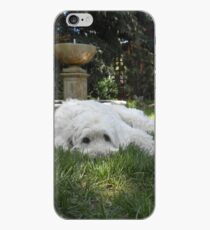Golden Doodle Dog in Grass iPhone Case