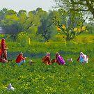 Rajasthani Villagers by Zohar Lindenbaum