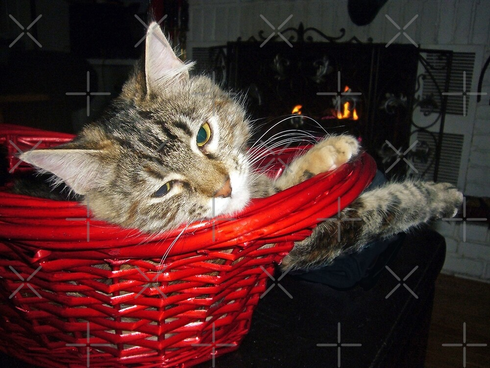 Kitten in a Basket by FrankieCat