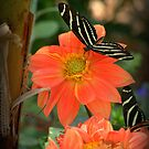 Peach Dahlia's With Longwing Butterflies  by K D Graves Photography