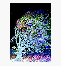 Tree of Dreams Photographic Print