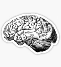 Brain Anatomy Sticker