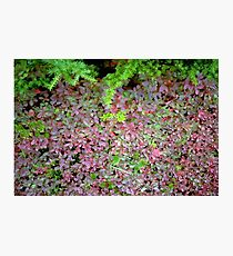 Carpeted Floor Photographic Print