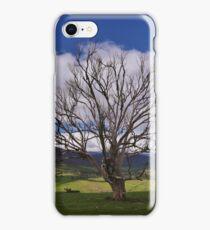 Alpine Tree iPhone Case/Skin