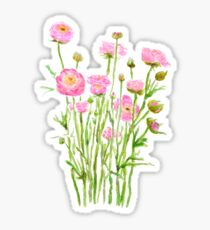 pink Ranunculus pink buttercup pink peony  Sticker