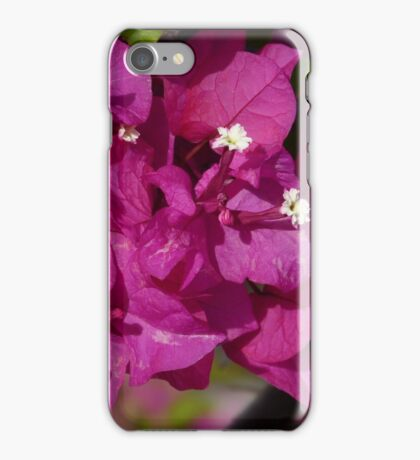 Brillitan Bougainvillea iPhone Case/Skin