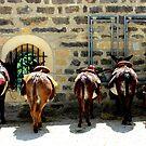Donkey's ass by Michelle Neeling