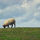 Sheep on the Hill by Vicki Field
