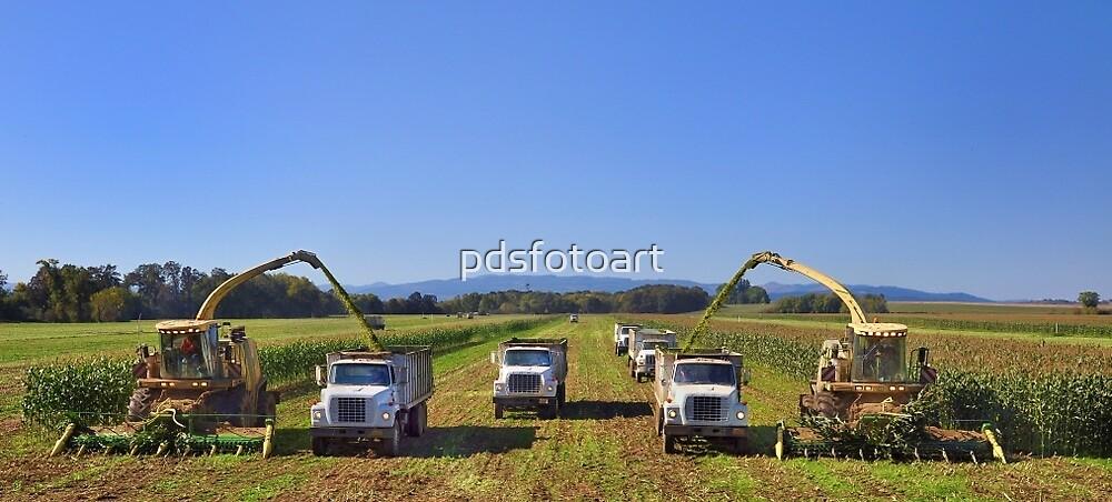 Corn harvest in Oregon by pdsfotoart