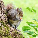 Smiling Squirrel von MMPhotographyUK
