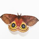 Female Io Moth by Alice Kahn