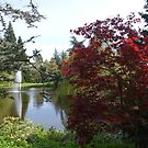 Beautiful garden. Colorful trees and water pond. by naturematters