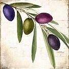 Olive Branch IV by mindydidit