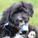 Baby dog by terrebo