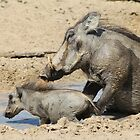 Warthog - African Wildlife Background - Animal Babies by LivingWild