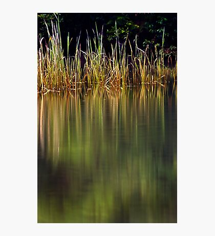 Blue Pool Reflections II Photographic Print