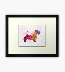 Scottish Terrier in watercolor Framed Print