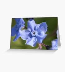 Blue For You Greeting Card