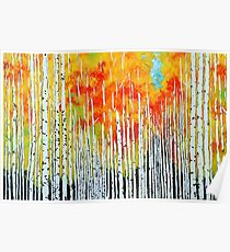 Autumn Aspen Trees Quaking Colorado Colorful Forest Poster