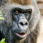 Gorilla von Darren Wilkes