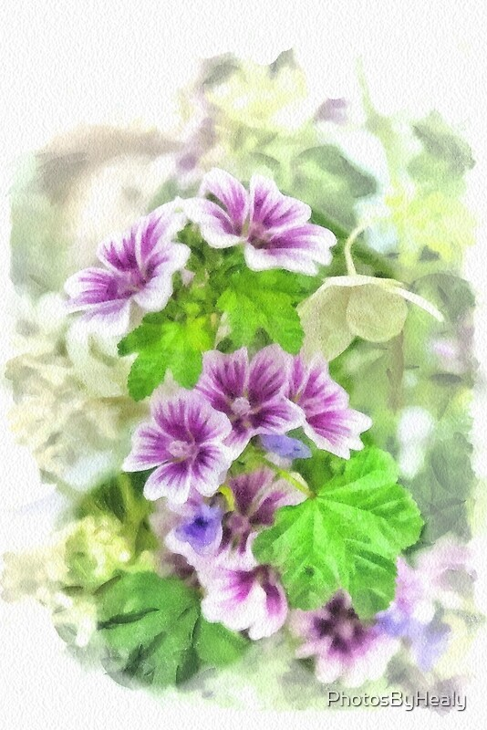 Tall Mallow - watercolour by Photos by Healy
