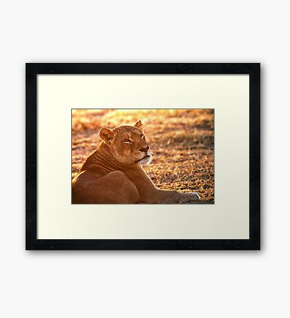 The Morning Glow Before The Hunt Framed Print
