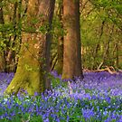 Blue Bell Paradise by carolhynes