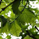 Green Summer Rain with Grape Leaves by Georgia Mizuleva