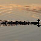 Ducks at sunset by nealbarnett
