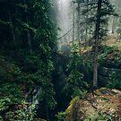 Canadian Forests  by Sander van der Veen