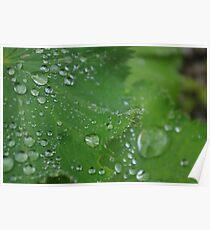Water droplet leaf? Poster