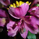 Purple Beauty by charmedy