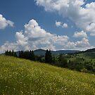 Wildflower Meadow in the Mountain by Georgia Mizuleva