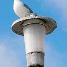 La Jolla Beach Seagull II by K D Graves Photography