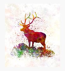 183e5bd14 Moose in Watercolor Art Animal Male Wall Cervidae Silhouette ...