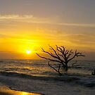 Sunrise at Botany Bay by bcollie