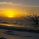 Sunrise at Botany Bay 2 by bcollie