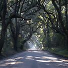 Botany Bay Road by bcollie