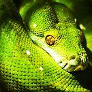 Python-itis. by BaliBuddha