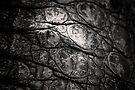 Rock Around the Croc. by BaliBuddha