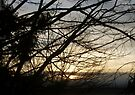 Branches at Sunset by Jaeda DeWalt